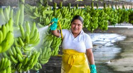 Promoting decent and productive employment for women (New)