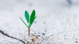 Fostering Green Business Growth