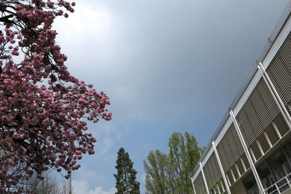 Sky with cherry blossoms