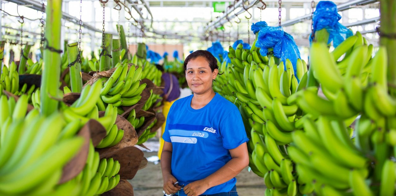 Worker in a banana plantation
